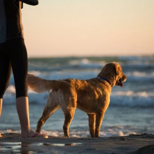 Pet dog and his owner at the beach